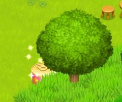 星の島のにゃんこ 猫缶は木の陰や設備の陰に隠れていることも・・・