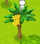 星の島のにゃんこ バナナの木