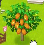 星の島のにゃんこ カカオの木